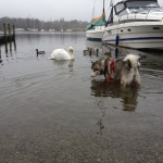Mishka paddling with her new pals